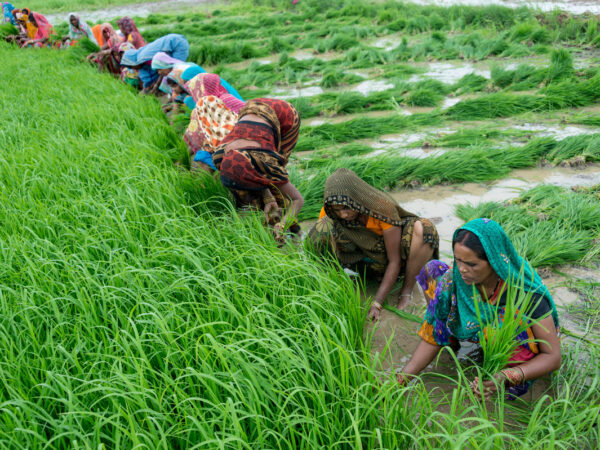 The Farmers (Empowerment and Protection) Agreement on Price Assurance and Farm Services Ordinance, 2020